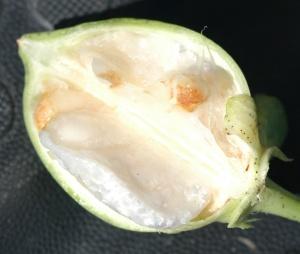 Fig G